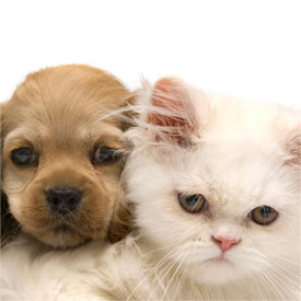 veterinarian for puppies and kittens pleasant hill animal hospital